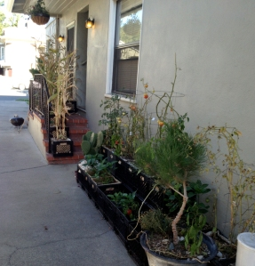 Our new neighbors sweet garden